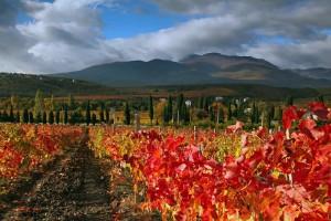 Crimea Vineyard